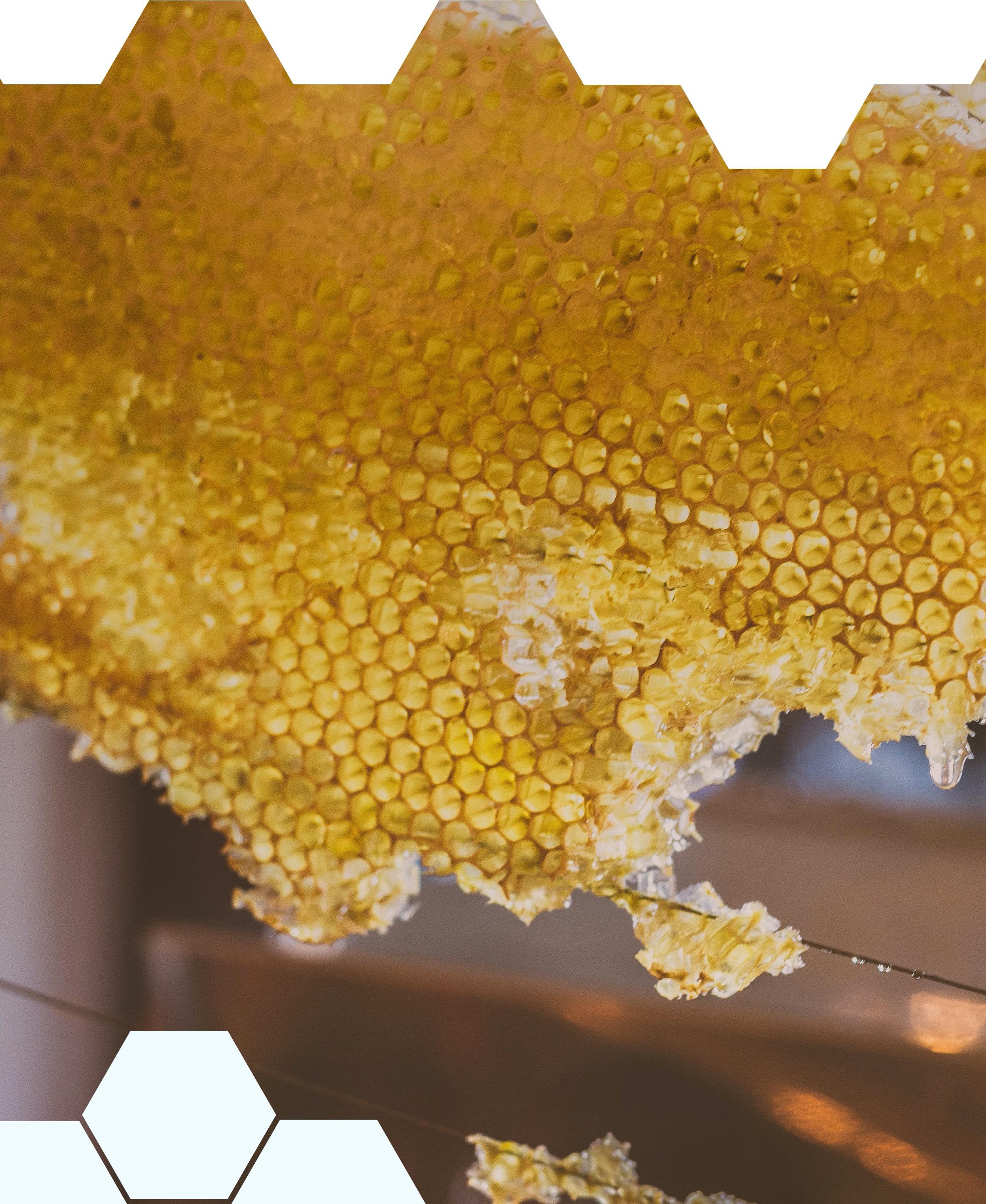 A close up of a honeycomb.