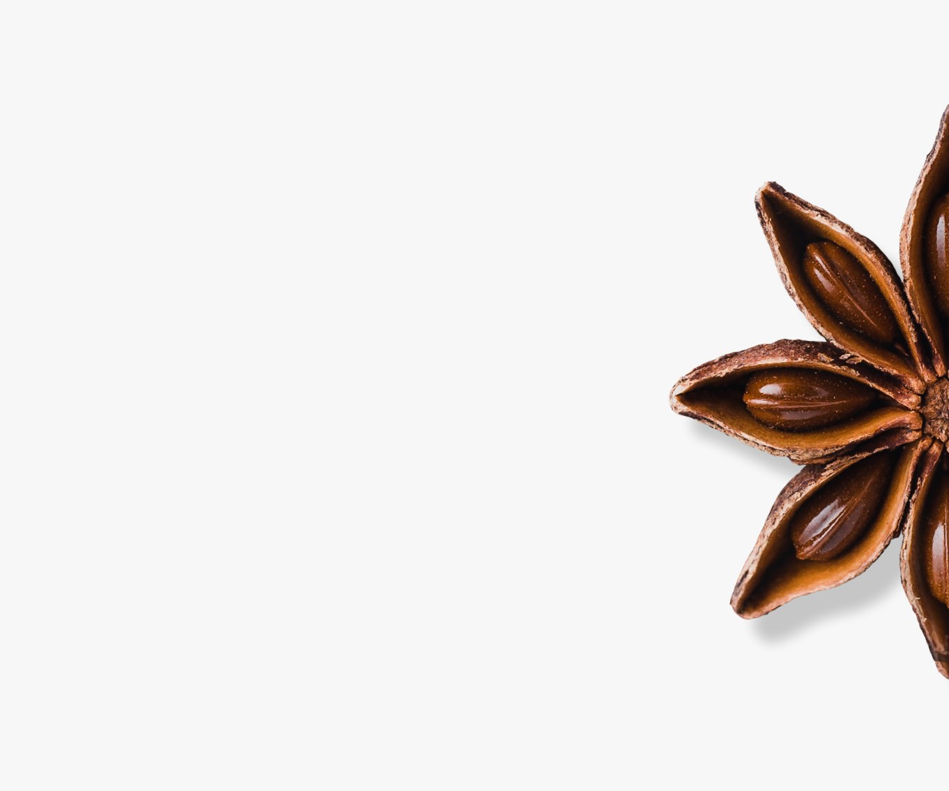 Single star anise spice.