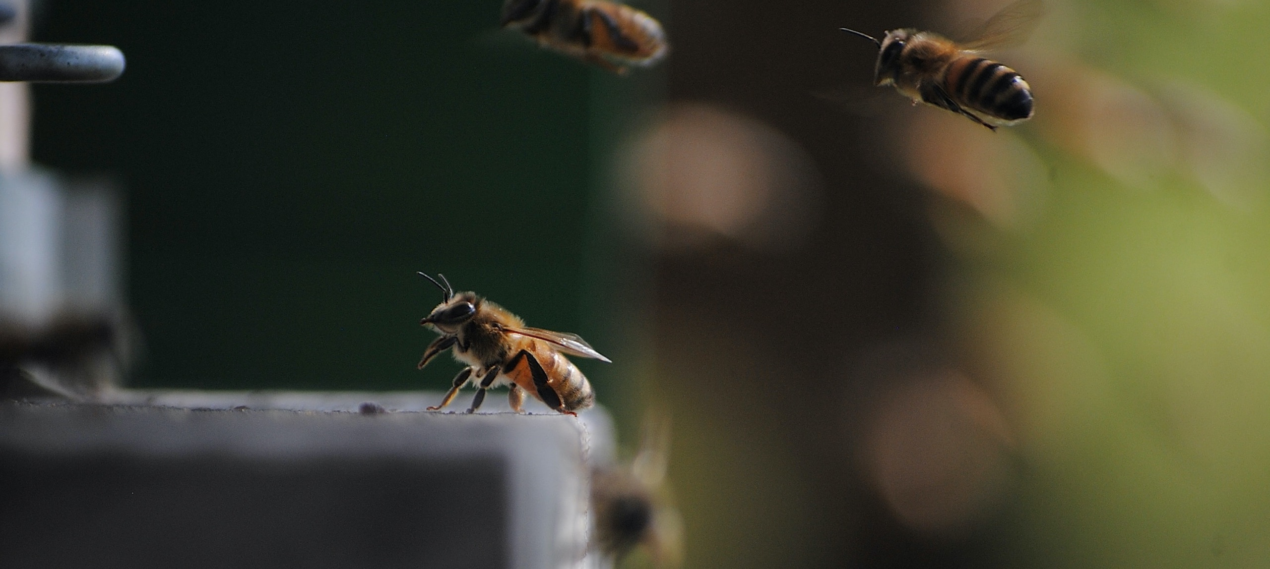 Close up on a group of bees.
