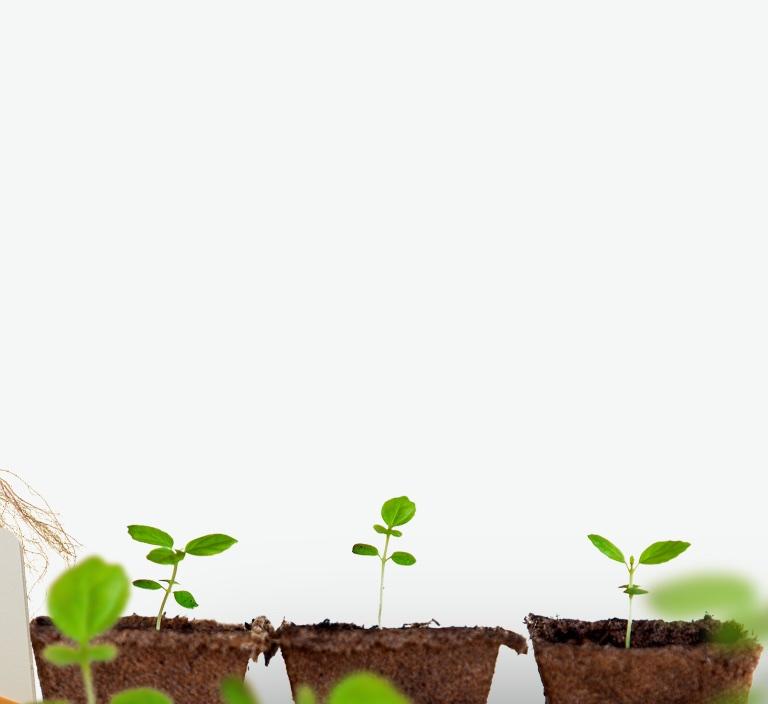 Plants growing.