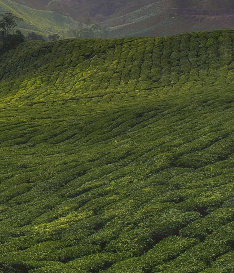A green field.